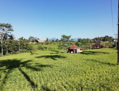 3 Wochen Bali Rundreise – Route und Kosten
