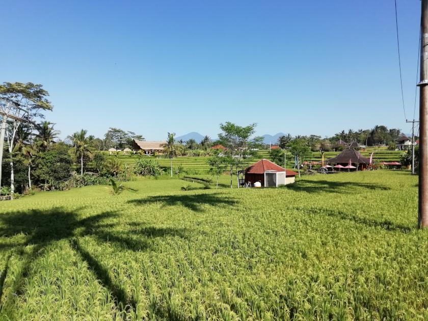 Bali-Rundreise-Ubud-Reisfelder