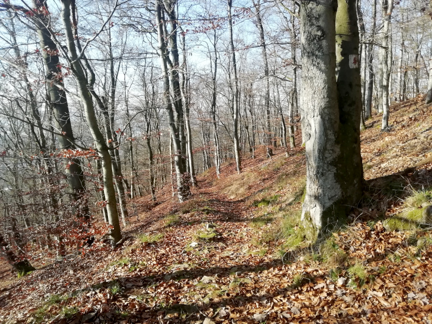 Fichtelgebirge-Wald-Natur-Winter