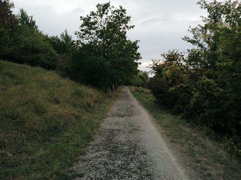 Neue-Wege-Waldweg