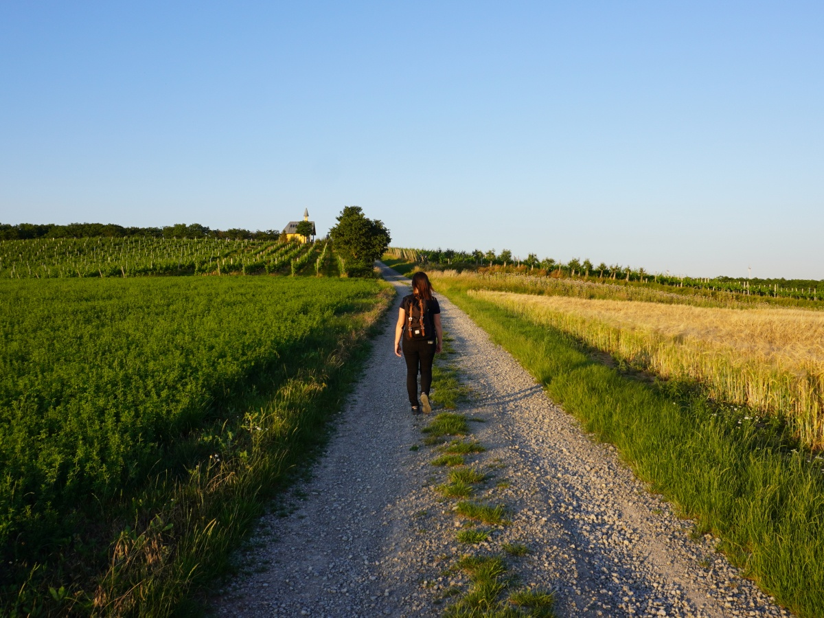 Wanderung-Weinberge-Mikroabenteuer