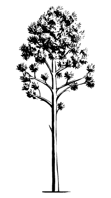 Baum Zeichnung Canva